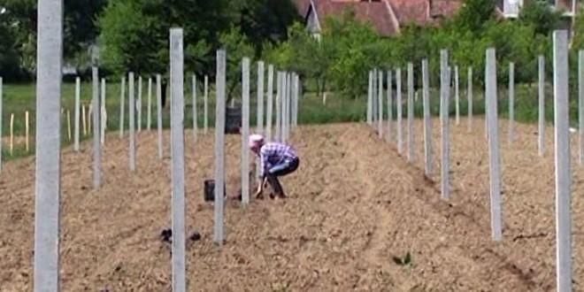 """Realizacija projekta zasada jagodičastog voća u okviru projekta """"Migracije i razvoj"""""""
