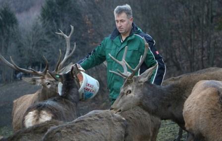 Muhamed Kahrimanović u Sanici uzgaja alpske jelene: Pokušaj da se ljubav pretvori u biznis