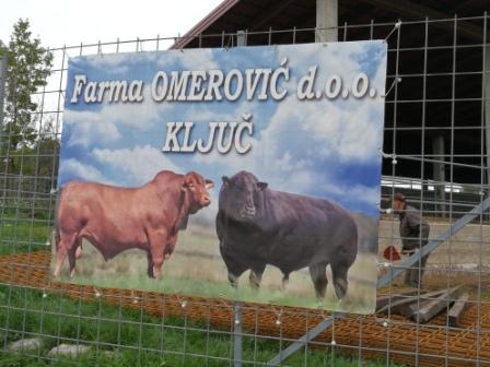 """""""Farma Omerović"""" d.o.o. Ključ – uzgoj goveda na savremen način"""